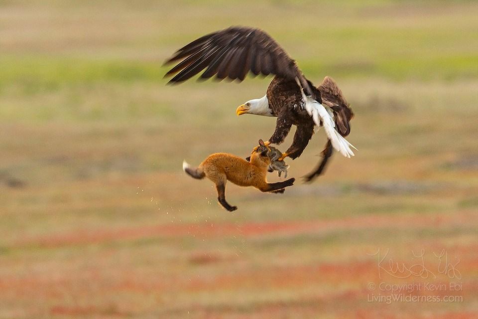 """""""Кошелек или жизнь"""": в мире животных свои бандиты"""