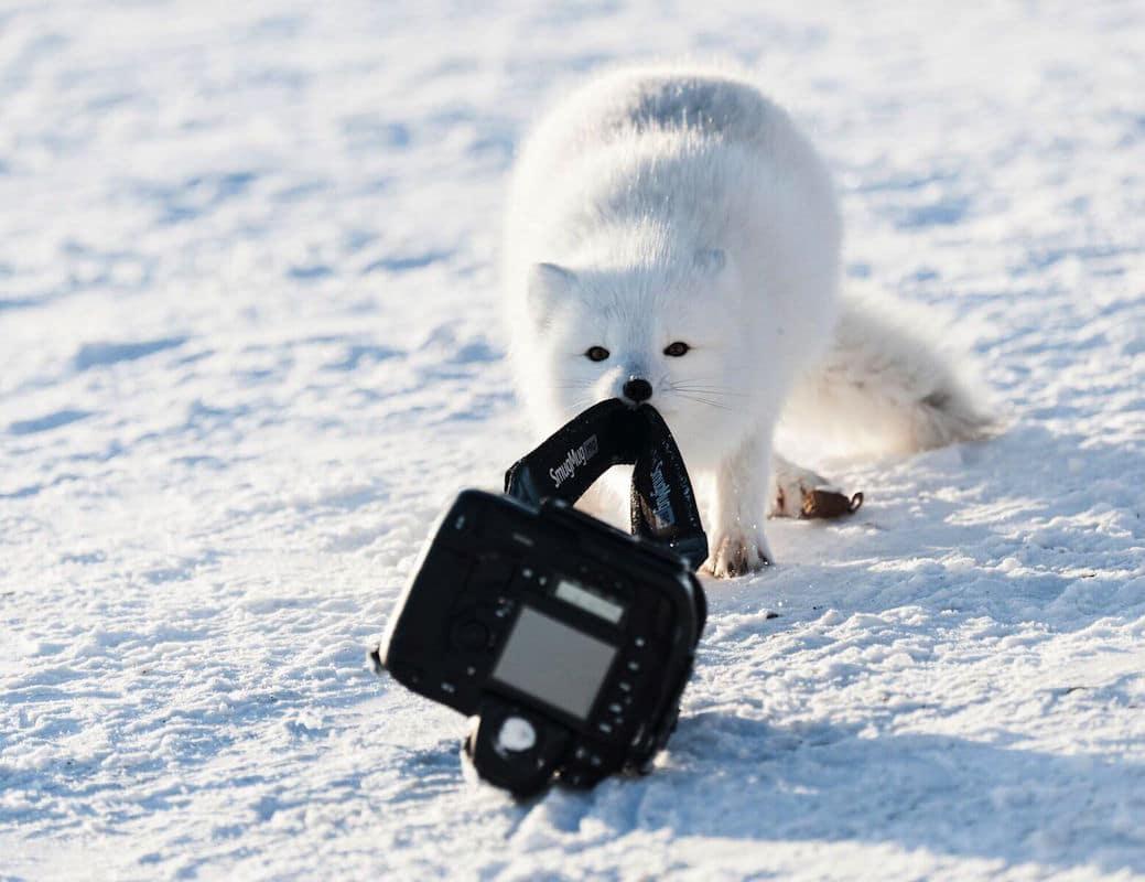 comedy-wildlife-photography-awards-mid-way-entries-8.jpeg