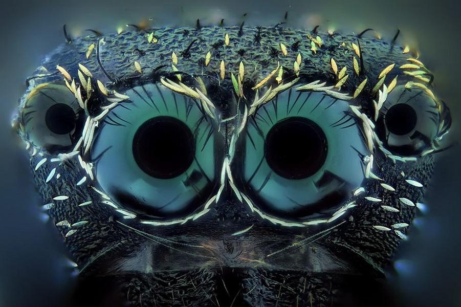 Милые и необычные: существа, похожие на инопланетян