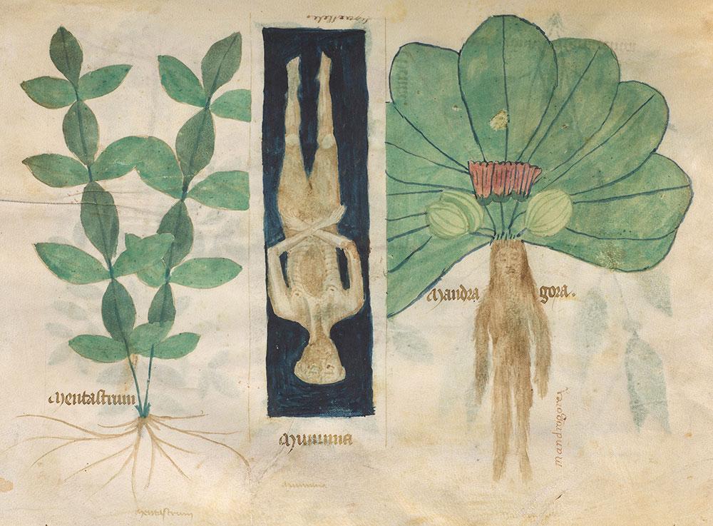 11-compendium-salernitanum.jpg