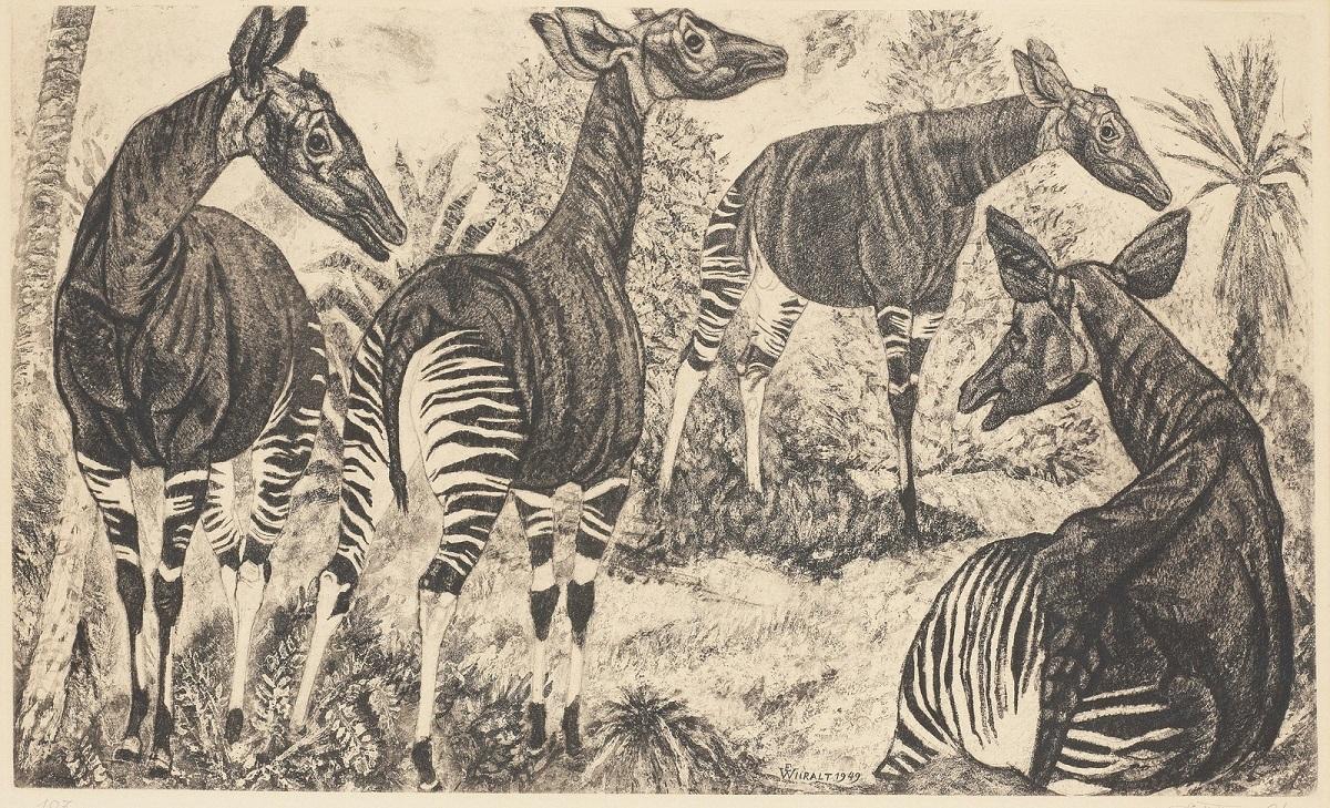 1949_Окапи (Ookapid)_24.5 x 43.6, лист 38 x 55.6_акватинта.jpg