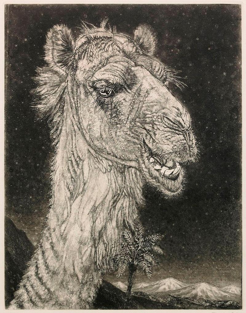 Арабский верблюд (Arabian Camel)_39 х 30_акватинта.jpg