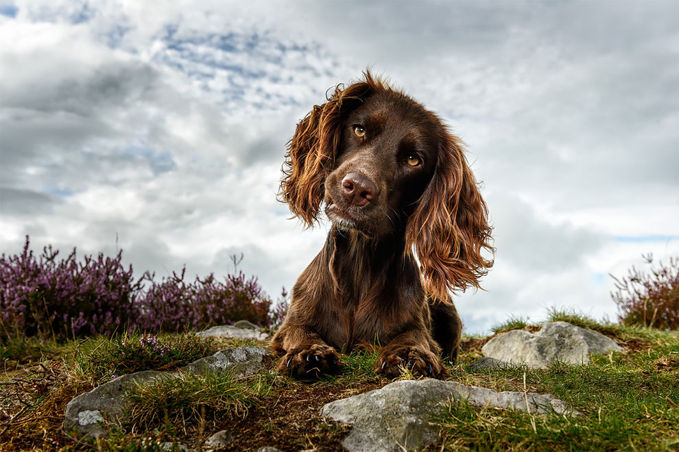 "Winners in the competition of British doggy photographer in 2018 place, Dogs, participation, First, different, ""Dogs, Maden, Plesser, when, equally, photo, Leslie, photographers, work, retrievers, Second, English, Sweeney,"" Secret, shadowing """