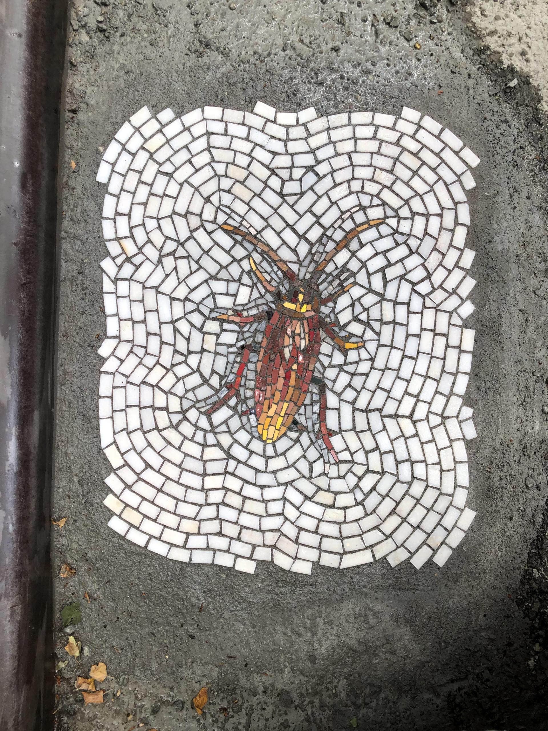 bachor-dead-cockroach1-960x1280@2x.jpg
