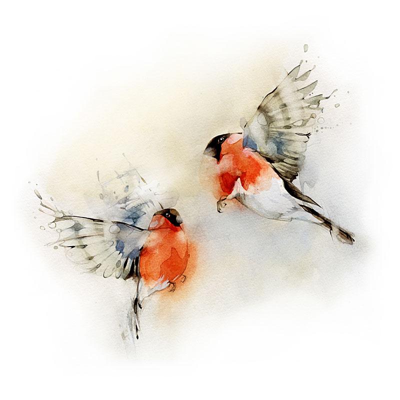 Bullfinches2.jpg