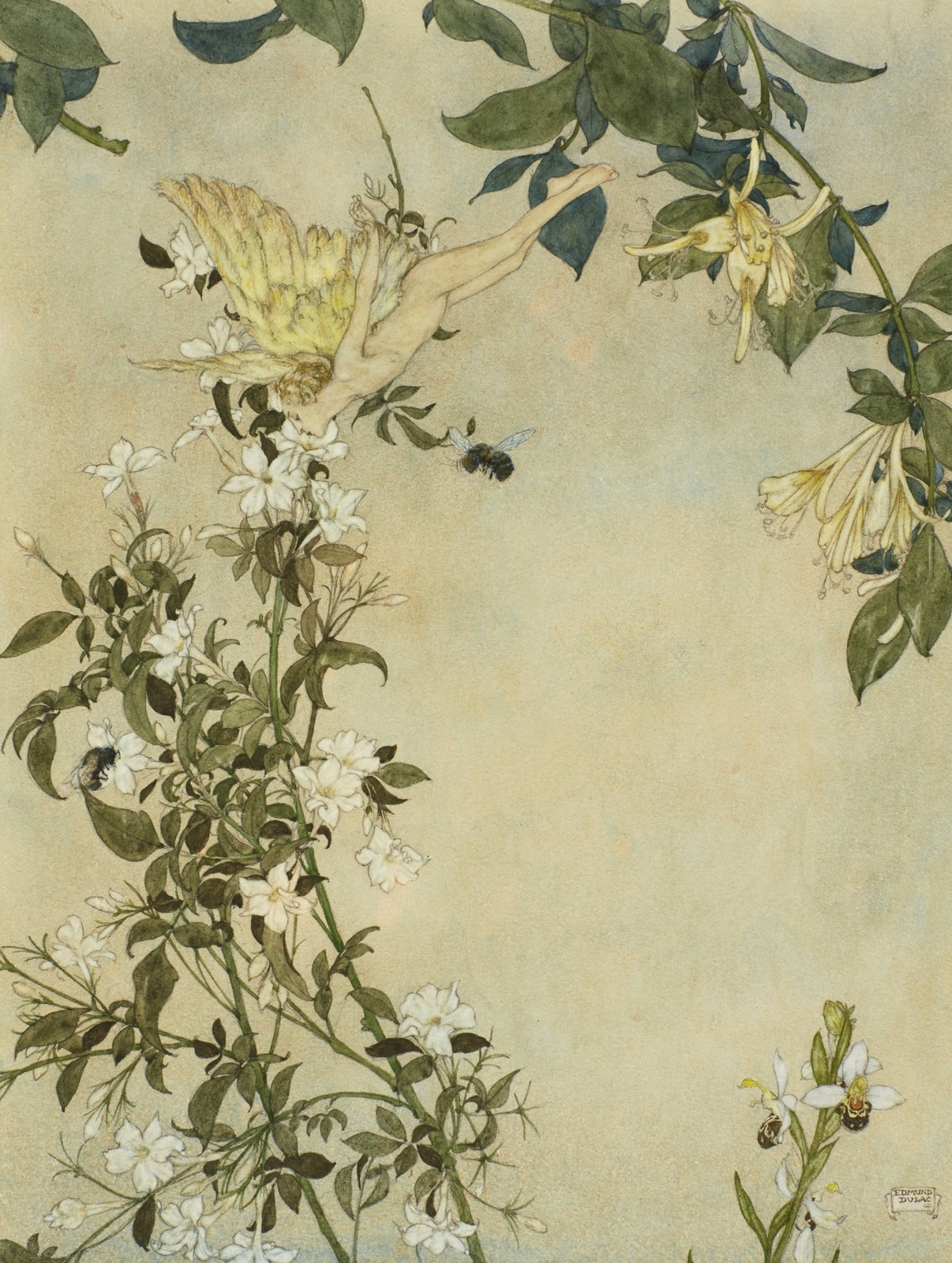 Где пчела берет нектар, там и я (Where The Bee Sucks, There Suck I)_33.2 х 24.3_акварель и тушь_Частное собрание.jpg