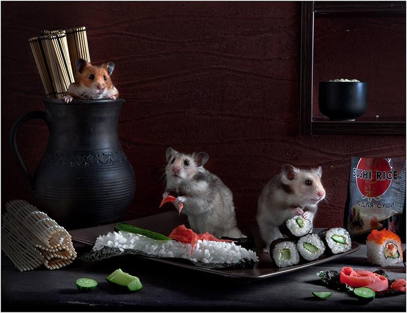 1371113819_hamsters07