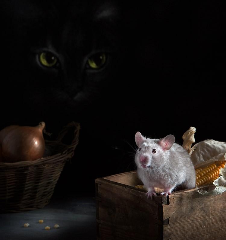 1371113820_hamsters08