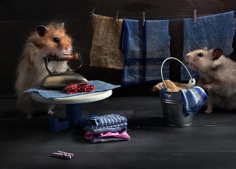 1371113860_hamsters05