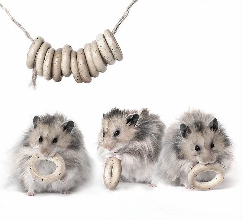 1371113875_hamsters13