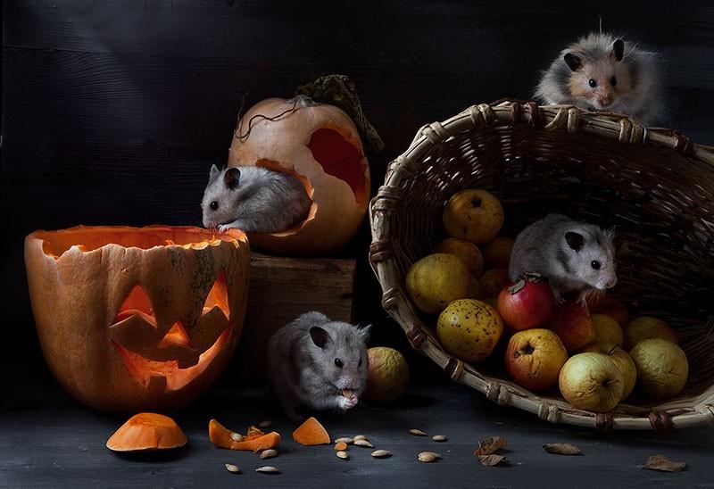 1371113879_hamsters02