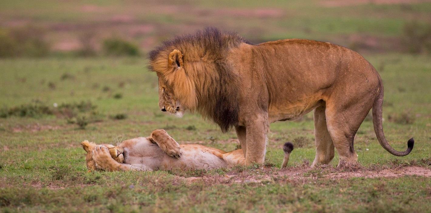 Wildlife photographer BESTlivejournal