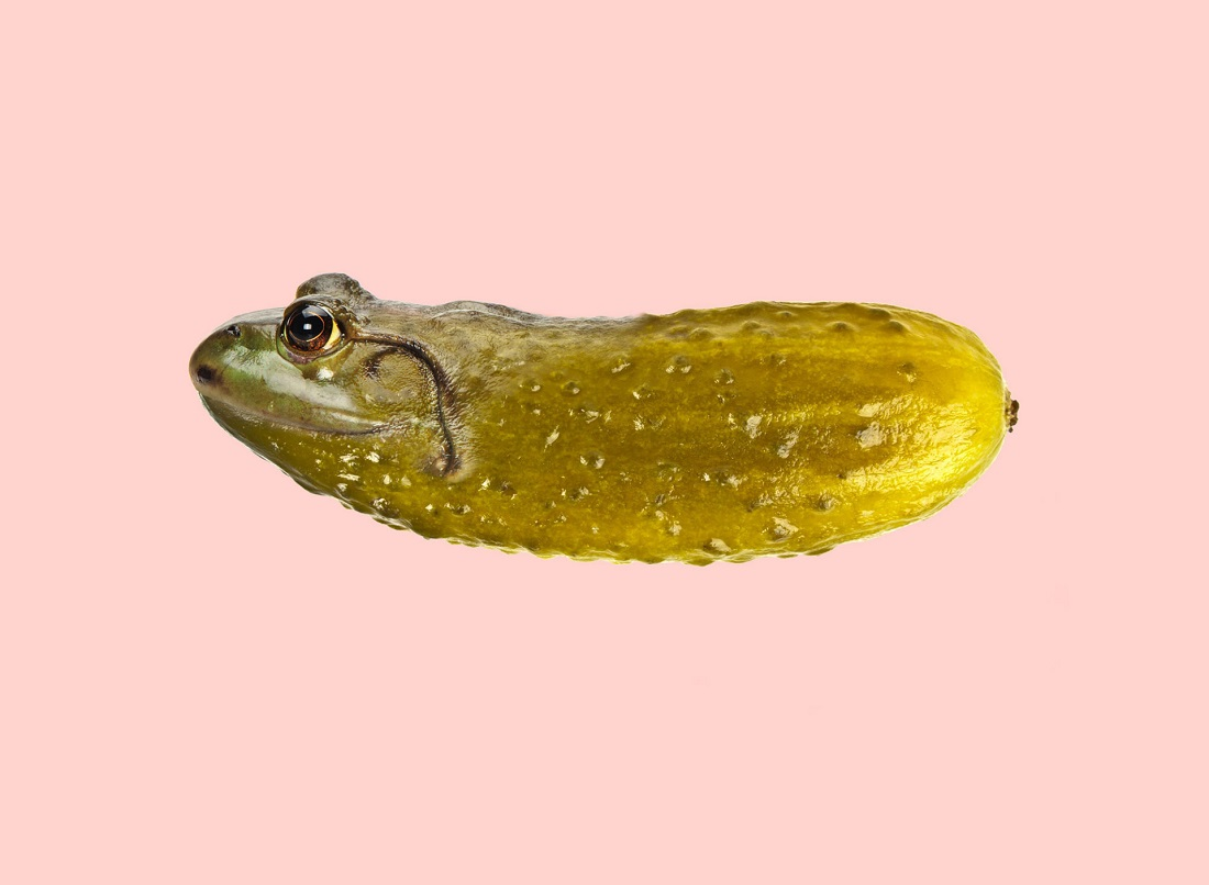 cucumber-frog-960x704@2x.jpg