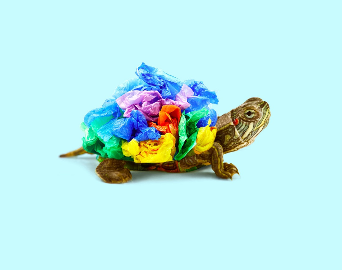 trash-turtle-960x756@2x.jpg