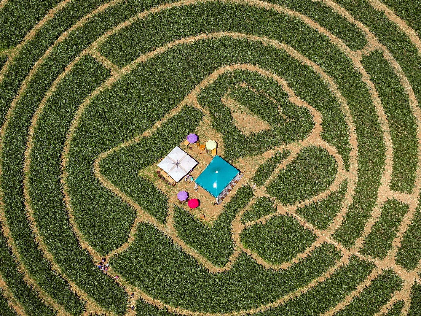 636662074185719569-EPA-epaselect-SWITZERLAND-CURIOSITIES-CORN-MAZE.jpg