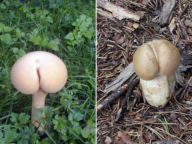 mushroom-butt15.jpg