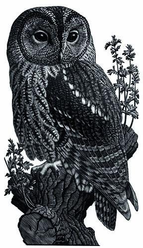 img1001508-wood-owl.jpg