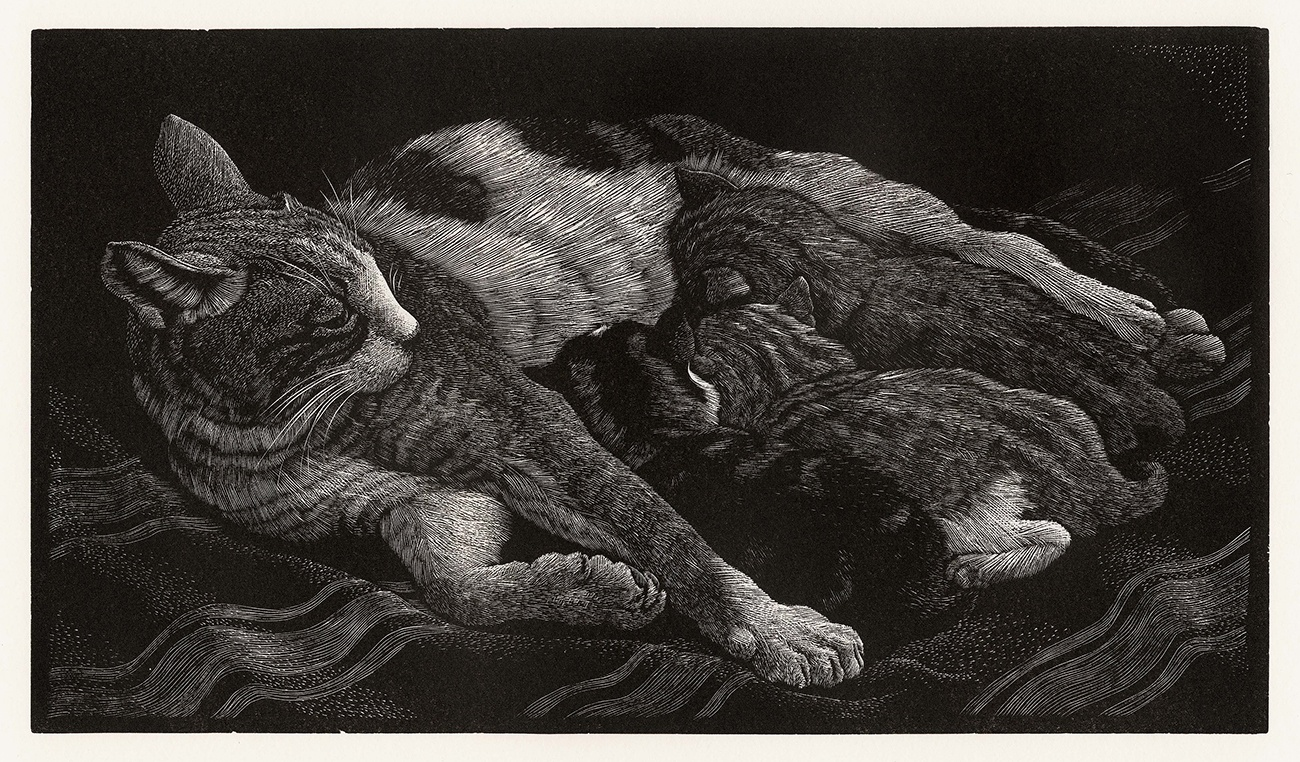 tunnicliffe_cat_kittens.jpg