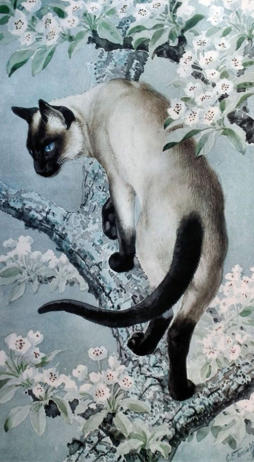 tunnicliffe_cat_tree.jpg