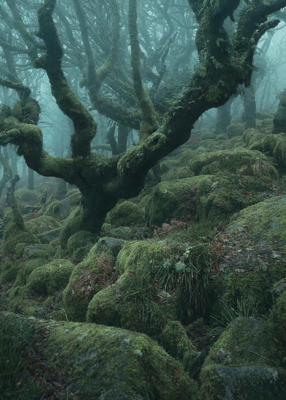 Лес Нила Бернелла (3).jpg