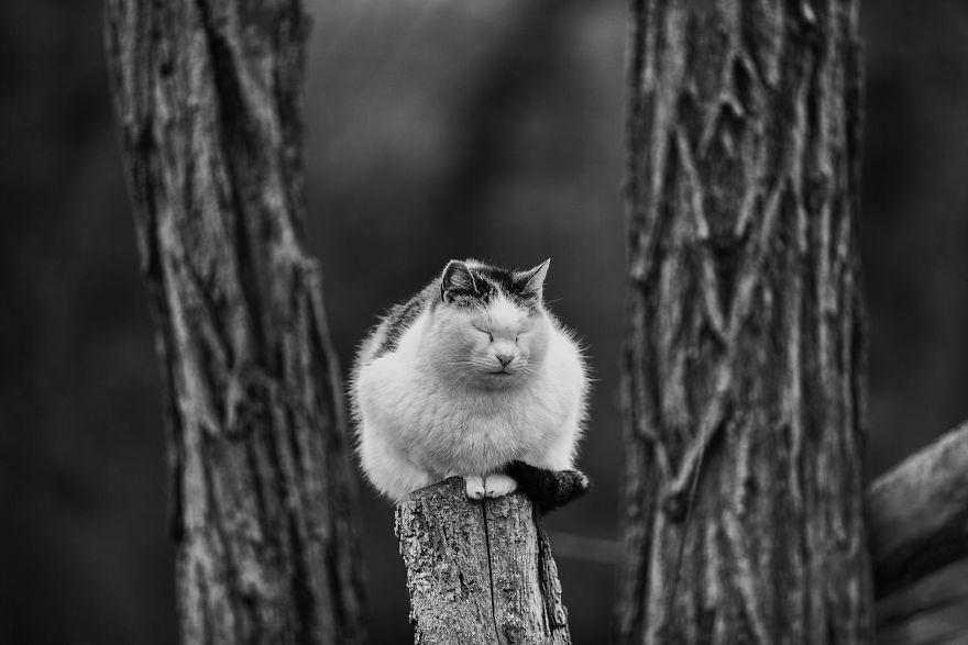 monorail_cats_photos_sabrina_boem_03.jpg
