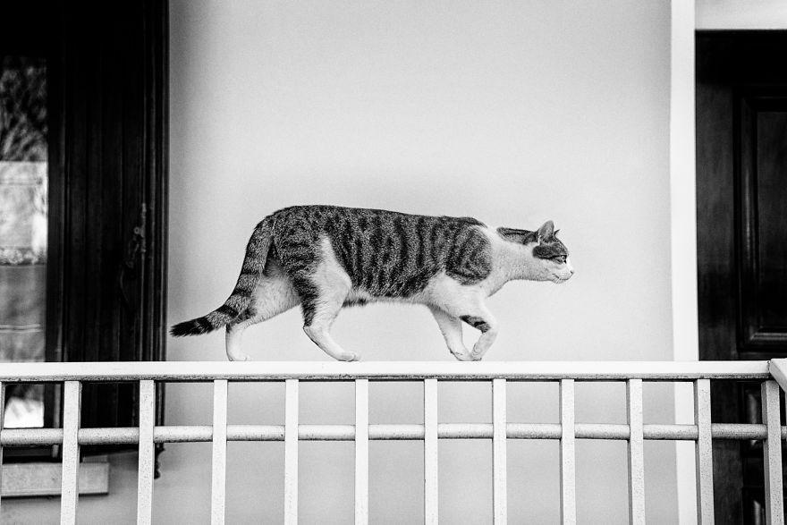 monorail_cats_photos_sabrina_boem_07.jpg