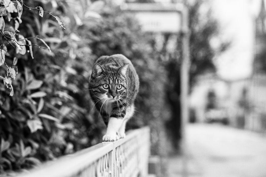 monorail_cats_photos_sabrina_boem_08.jpg