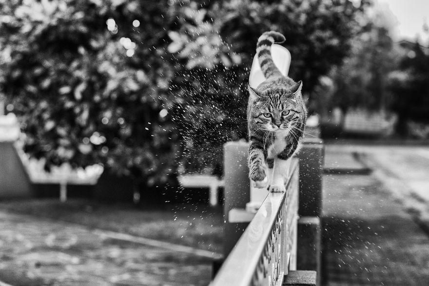 monorail_cats_photos_sabrina_boem_17.jpg