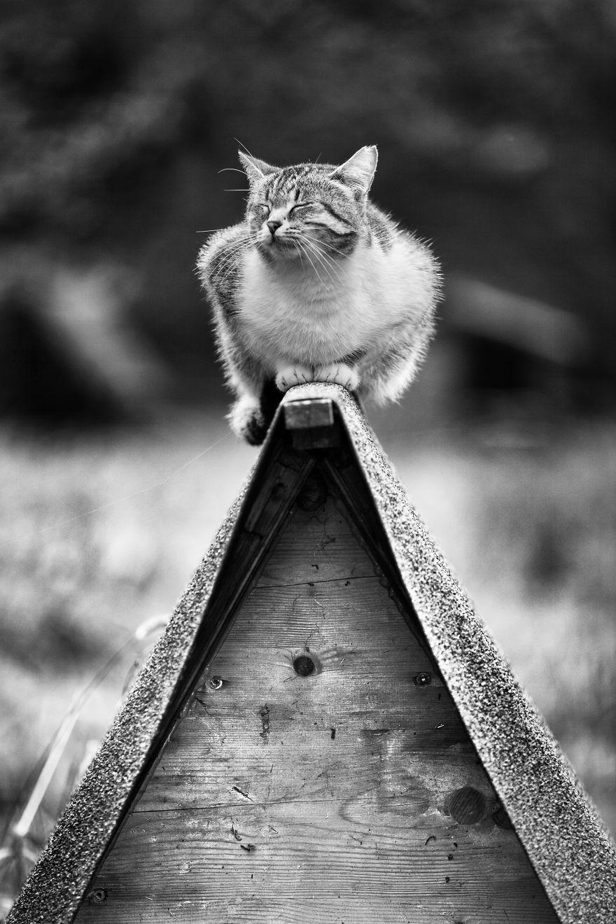 monorail_cats_photos_sabrina_boem_18.jpg