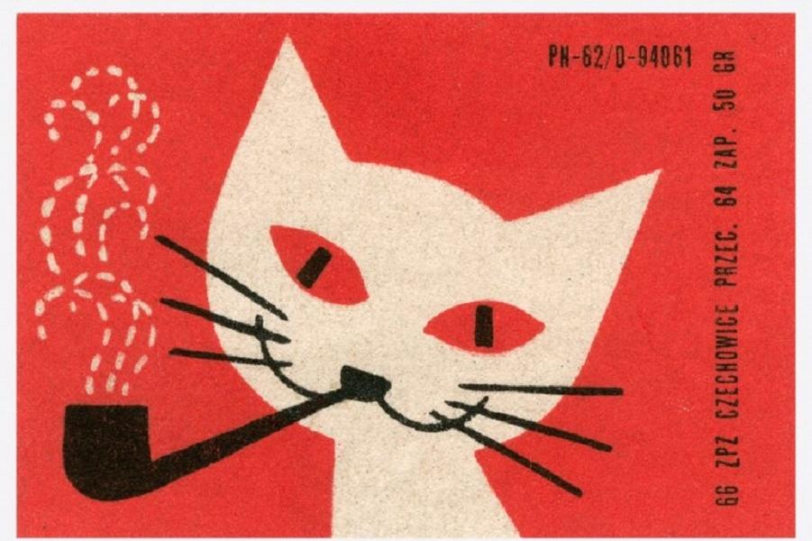 cat-768x528.jpg