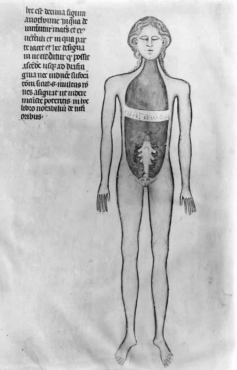 anatomy-1345-768x1197.jpg