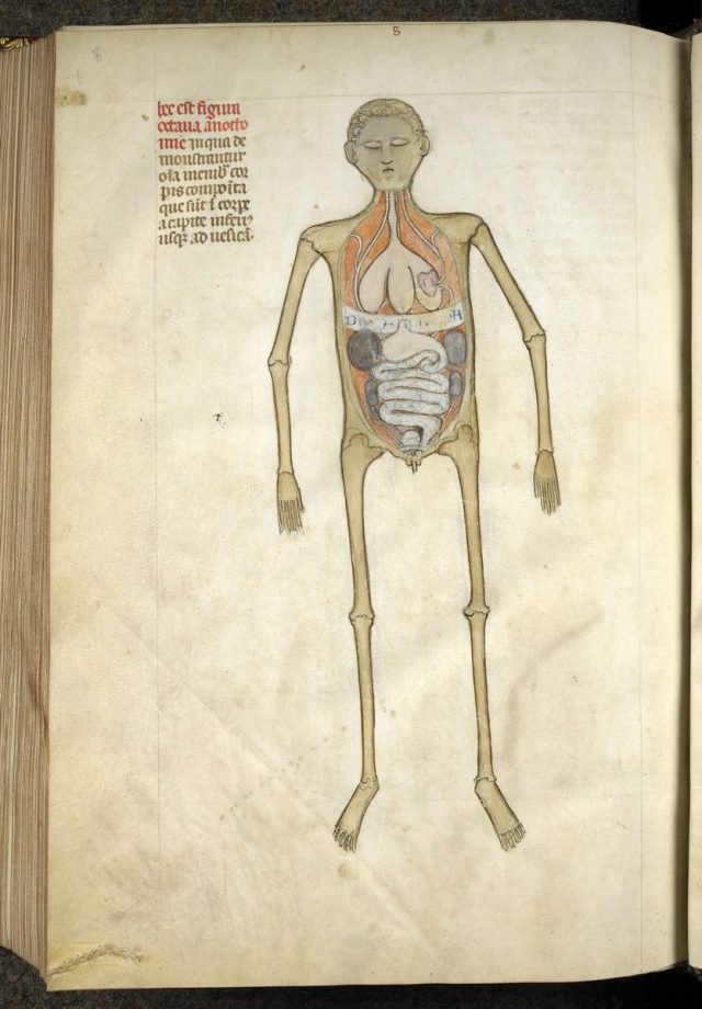 Neuroanatomical-plates-by-Guido-from-Vigevano-in-the-Anathomia-Designated-for-Figures-written-in-1345-640x920.jpg
