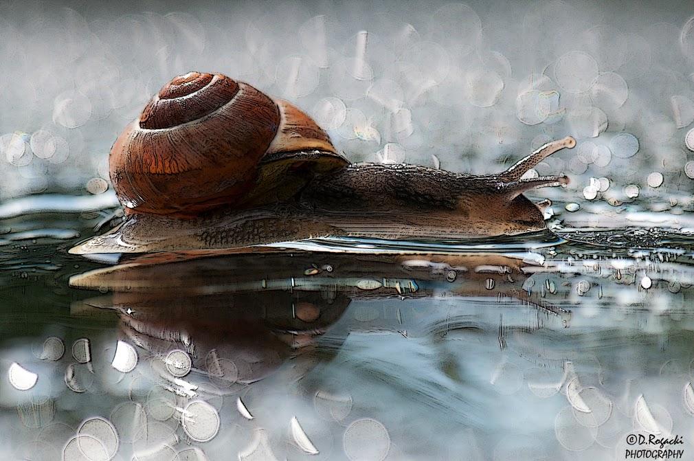 DSC_4563-snail