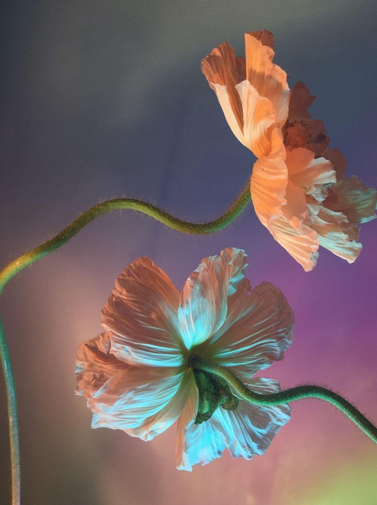 I-poetici-scatti-still-life-floreali-di-Doan-Ly-Collater.al-4.jpg