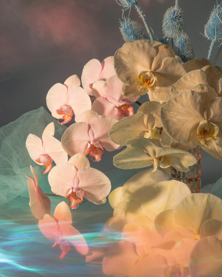 I-poetici-scatti-still-life-floreali-di-Doan-Ly-Collater.al-7.jpg