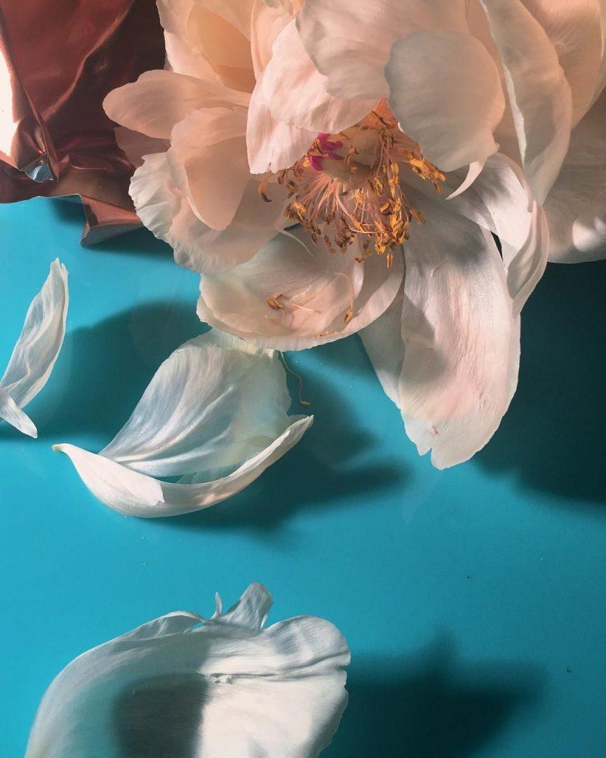 I-poetici-scatti-still-life-floreali-di-Doan-Ly-Collater.al-11-864x1080.jpg