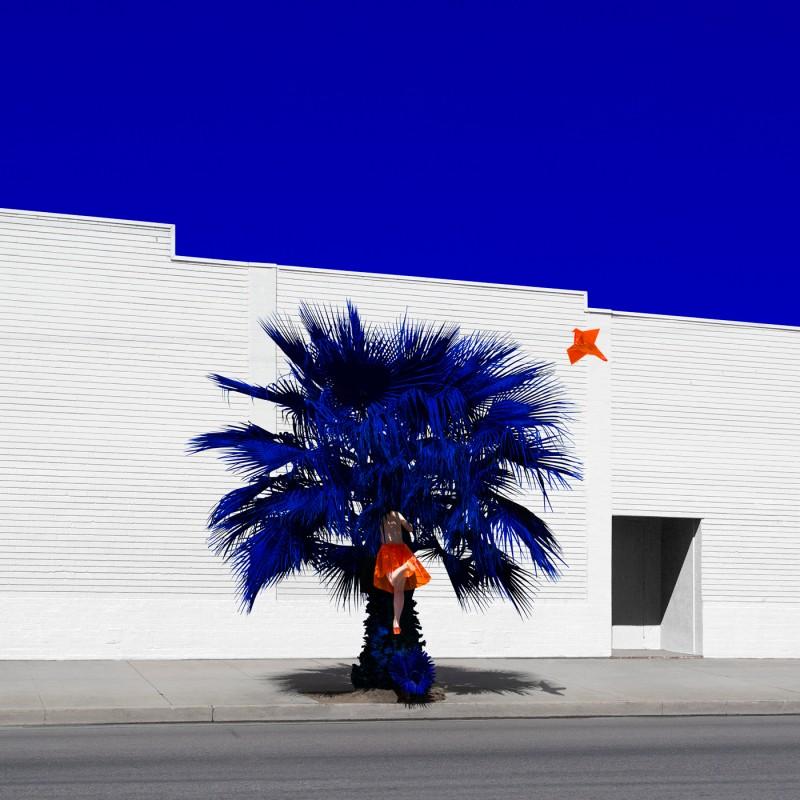 Palm©Reine-Paradis-800x800.jpg