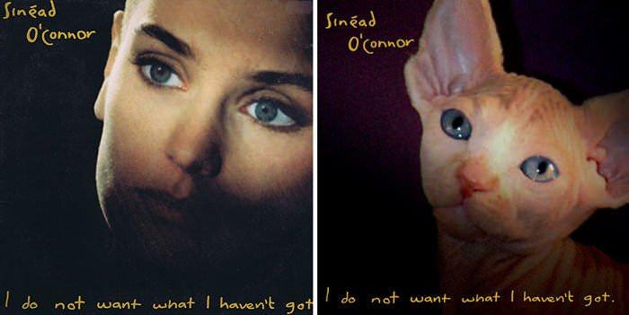 catmusiccovers2.jpg