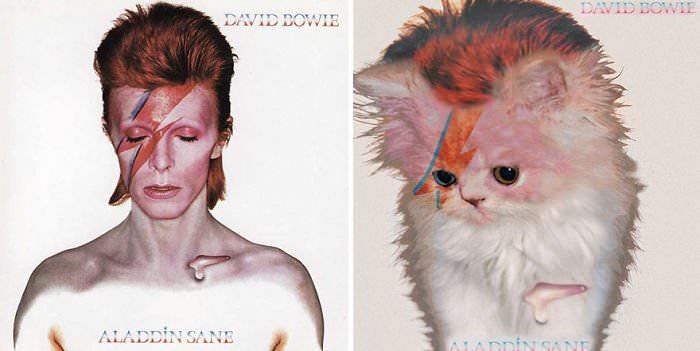 catmusiccovers9.jpg