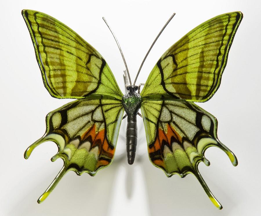 Kaiser-I-Hind-Butterfly-min-1.jpg