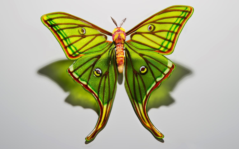 Spanish-Moon-Moth-Graellsia-isabellae-1-min.jpg