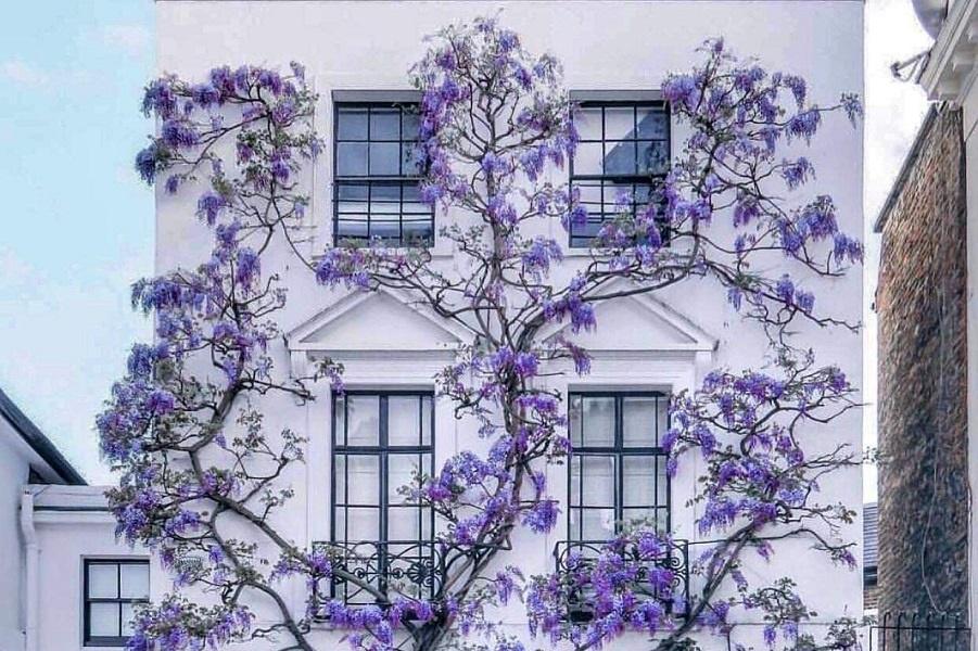 Весна, цветы... на улицах и на картинах