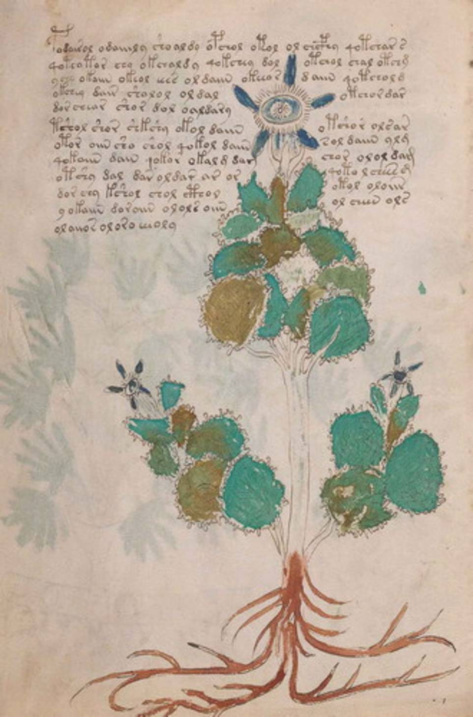 13535342-7031849-This_figure_shows_Folio_19_left_Borage_Borago_officinalis_The_fi-a-86_1557936438825.jpg