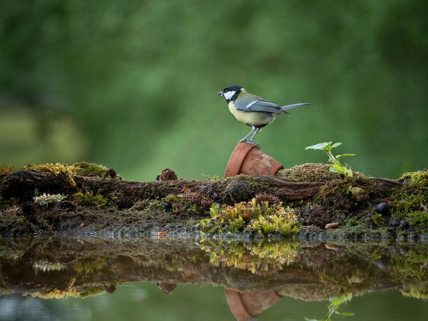 birds-6-5d089a3e6070a__880.jpg