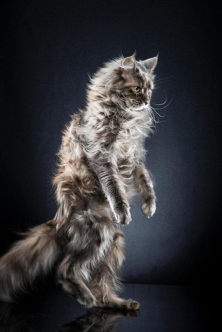 alexis-reynaud-standing-cats-7.jpg