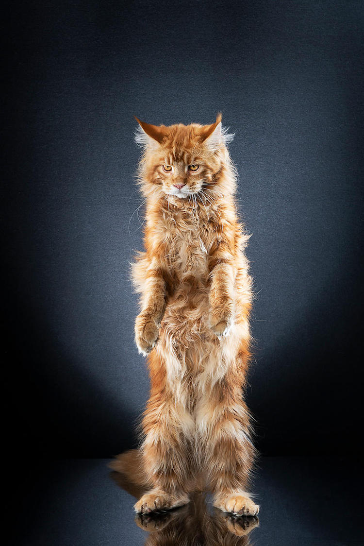 alexis-reynaud-standing-cats-19.jpg