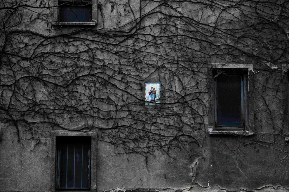 Плющ вьётся по стене дома в Мадриде