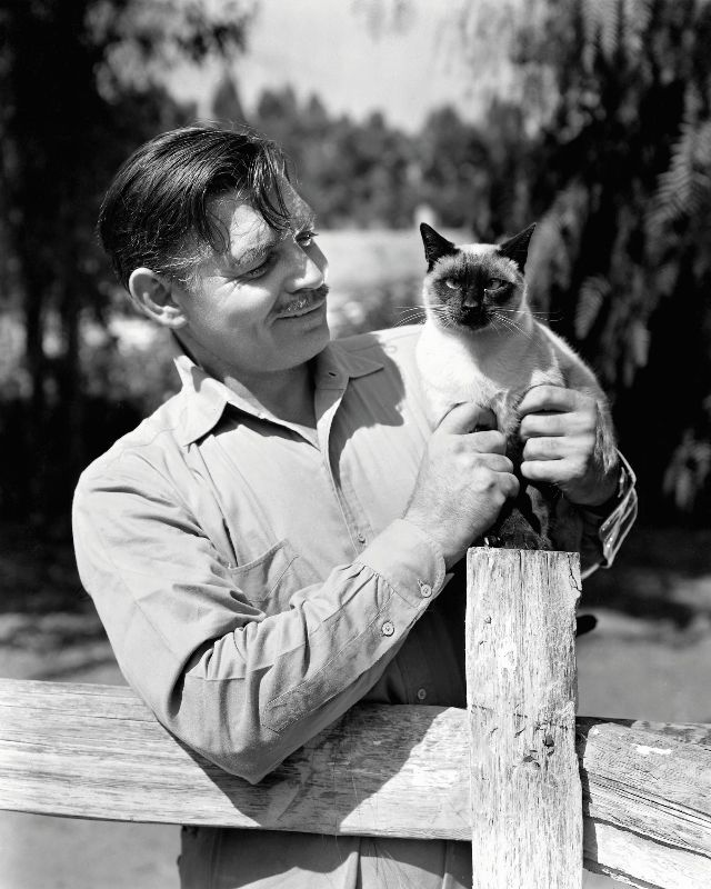 Clark Gable poses with one of the cats that lived on his 22-acre ranch in the San Fernando Valley, 1945. Photo from John Kobal Foundation.jpg