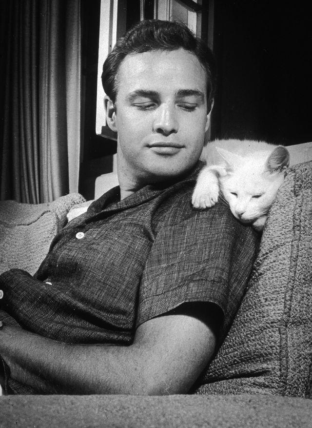 Marlon Brando leans back on a sofa and smiles at a cat, who lays across his shoulders, at his home in Los Angeles, California, 1954. Photo by Murray …