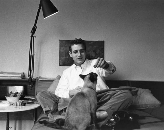 Paul Newman playing with his cat, Louis XIV, while sewing and smoking, 1978. Photo by Sanford Roth.jpg